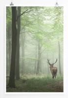 Poster Hirsch im Nebelwald