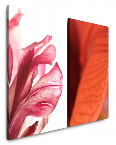 2 Wandbilderje 60x90cm Blüte Rosa Makro Rot Blumen Hippeastrum Amaryllis