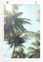 Kokosnuss Palmen von unten