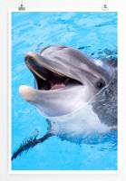 Poster Lächelnder Delfin