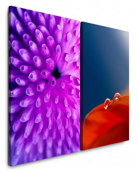 2 Bilder je 60x90cm Koralle Unterwasser Blume Rot Violett Nahaufnahme Tropfen