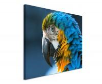 Premium Leinwandbild Papagei im Portrait