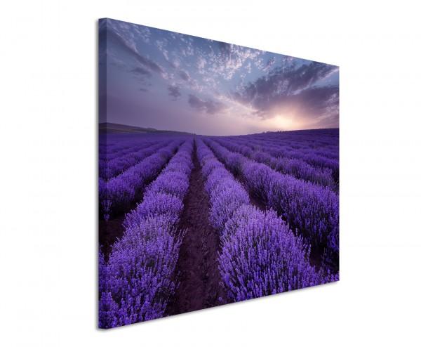 Leinwandbild Lavendel am blühen