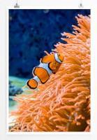 Poster Clownfisch am orangen Korallenriff
