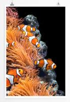 Poster Korallen und Clownfische
