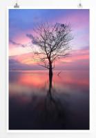 Poster Baum bei Sonnenaufgang