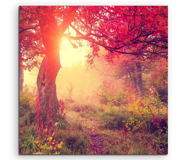 Baum im Herbst bei Sonnenaufgang mit roten Blättern