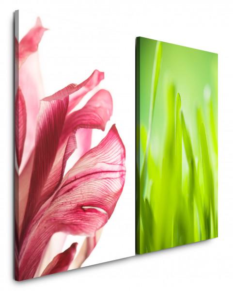 2 Bilder je 60x90cm Rot Blume Grashalme Grün Frisch Nahaufnahme Makro