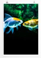 Poster Zwei verschiedenfarbige Goldfische