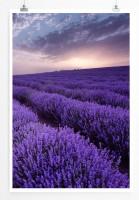 Poster Lavendelfelder bei Sonnenaufgang