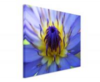 Leinwandbild Gelb blaue Lotusblüte