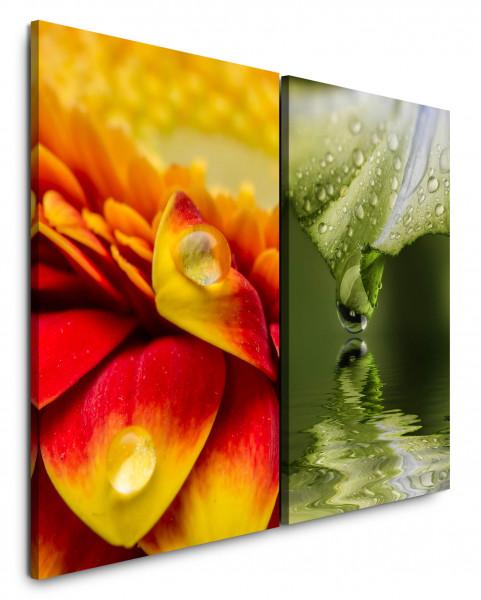 2 Bilder je 60x90cm Tropfen Wassertropfen Blume Blüte Makro Nahaufnahme Erfrischend