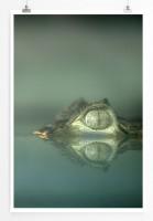 Poster Alligator im Wasser