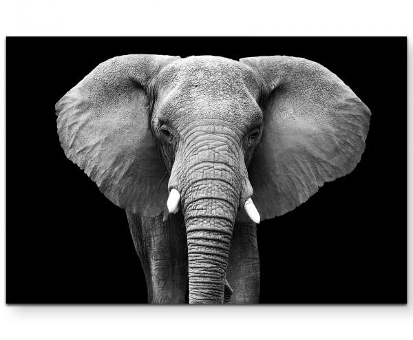 Details Zu Elefant Schwarzweiß