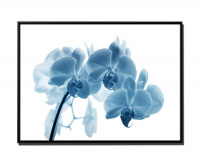 Blume Orchidee