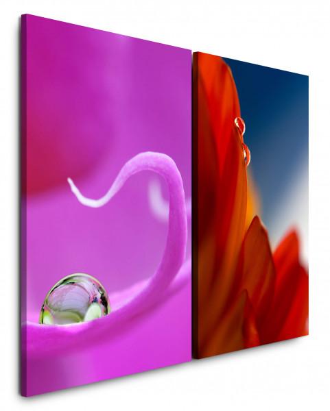 2 Bilder je 60x90cm Pink Wassertropfen Blumen Blüten Rot Nahaufnahme Makro