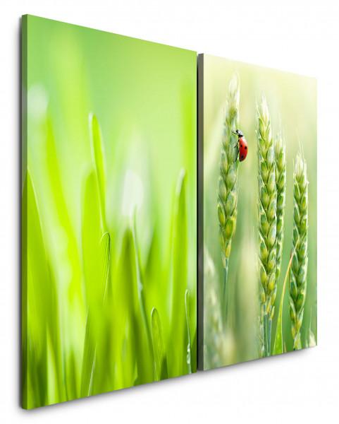 2 Bilder je 60x90cm Gras Grün Weizen Marienkäfer Sommer Hellgrün Beruhigend