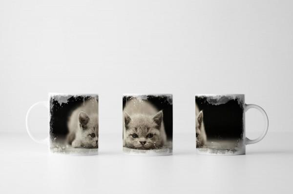 Tasse Dösendes Britisch Kurzhaar Kätzchen