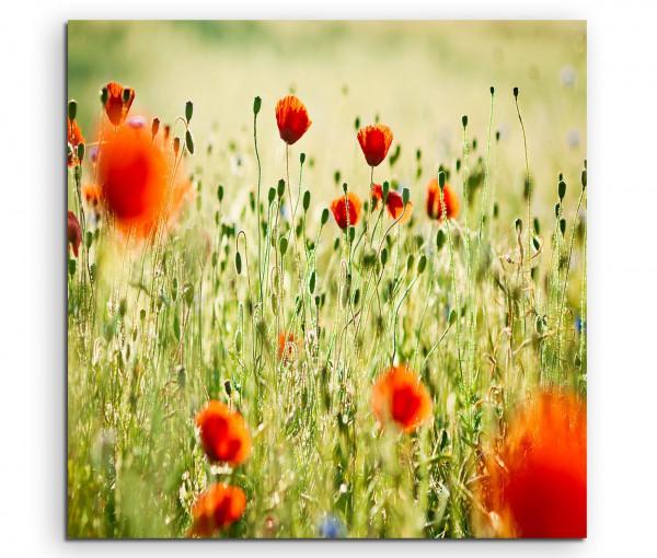 Leinwandbild Mohnblumen am blühen bunte Sommerwiese
