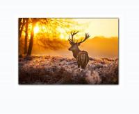 Hirsch im Wald bei Sonnenuntergang