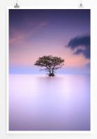 Poster Einsamer Baum im Nebel