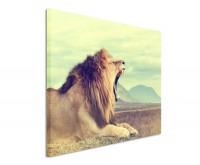 Premium Leinwandbild Löwe in der Savanne