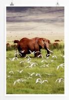 Poster Afrikanischer Elefant