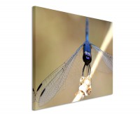 Leinwandbild Blaue Libelle