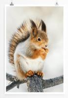 Poster Süßes Eichhörnchen im Winter