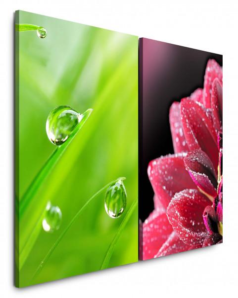 2 Bilder je 60x90cm Gras Grashalme Wassertropfen Grün Frisch Nahaufnahme Blume