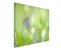 Leinwandbild Schmetterling mit Frühlingswiese