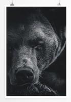 Poster Porträt eines Braunbären schwarz weiß