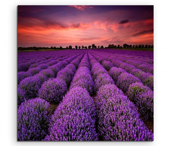 Leinwandbild Wunderschöner Lavendel am blühen Lila bei Sonnenuntergang