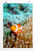 Poster Clownfisch im Korallenriff