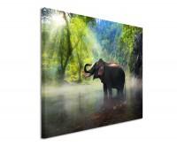 Premium Leinwandbild Elefant im Dschungel