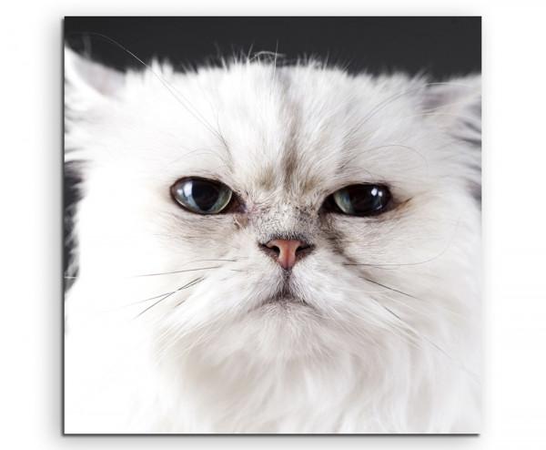 Leinwandbild Weiße Katze in Nahaufnahme
