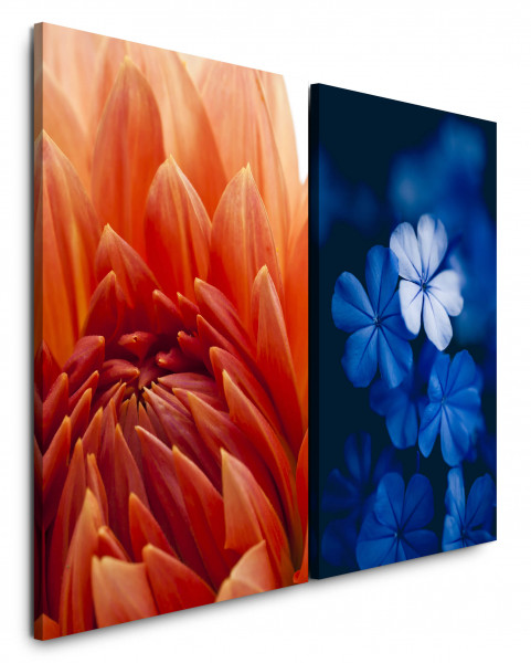 2 Bilder je 60x90cm Dahlie Blüte Blume Blau Rot Nahaufnahme Fotokunst