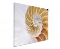 Leinwandbild Spiralförmige Muschel mit Fibonacci Symmetrie