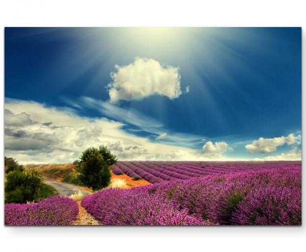 Lavendel blüht auf Feld