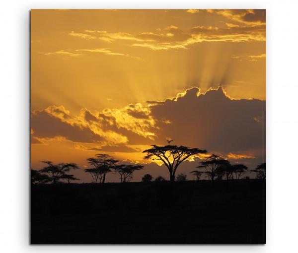 Afrikanischer Sonnenuntergang im Akazienhain