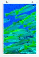 Poster Neongrüne Fische aus Thailand