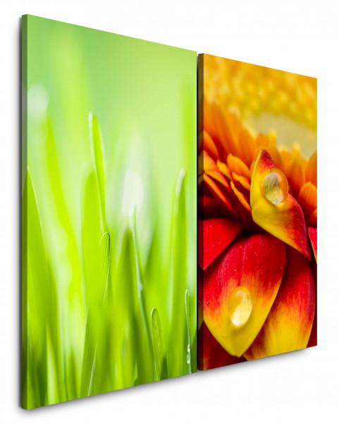 2 Bilder je 60x90cm Grass Grashalme Tropfen Makro Grün Sommer Blumen