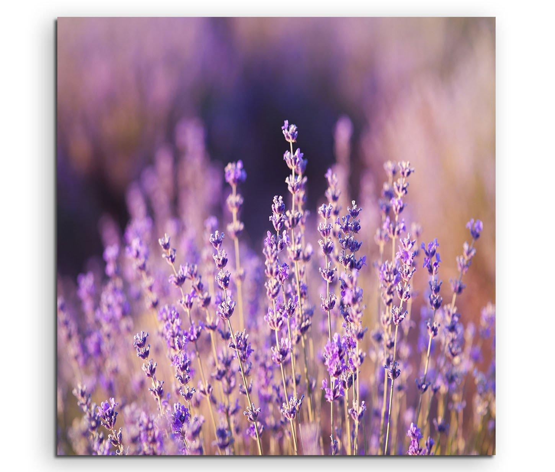 Wandbild Lavendel in der Sonne online kaufen | bestforhome_de