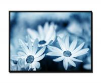 Blüten auf Blumenwiese