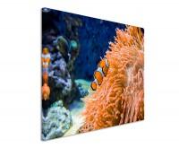 Premium Leinwandbild Clownfisch in Anemone