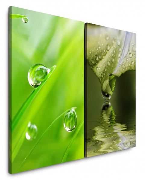 2 Bilder je 60x90cm Gras Grashalme Grün Wassertropfen See Nahaufnahme Erfrischend