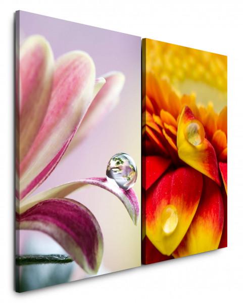 2 Bilder je 60x90cm Tropfen Blumen Blüten Rosa Makro Gemütlich Schön