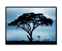 Akazienbaum Afrika