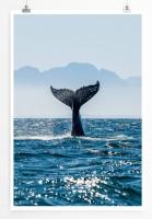 Poster Flosse eines Buckelwals