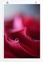 Poster Rote Rose Blätter
